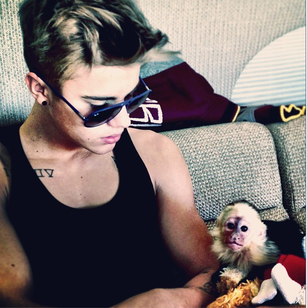 justin bieber monkey cute photos here 2